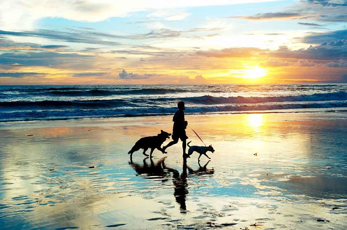 strand loop met honden